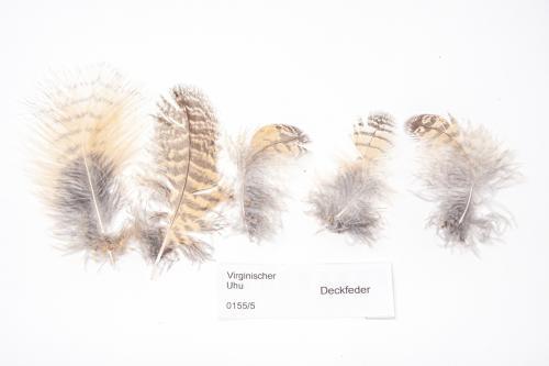 Feder-Set vom Virginia Uhu - Deckfedern - 00155-5