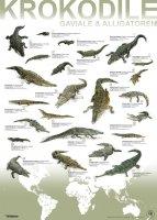 Artenplakat - Krokodile Gaviale & Alligatoren - A2 -...