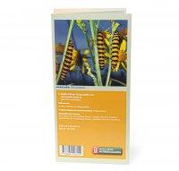 Bestimmungskarte - Schmetterlingsraupen