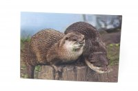 3D Postkarte Otter