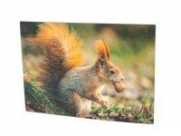 3D Postkarte Eichhörnchen