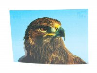 3D Postkarte Steinadler