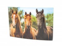 3D Postkarte Pferde braun
