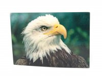 3D Postkarte Weißkopfseeadler