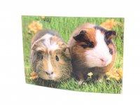 3D Postkarte Meerschweinchen