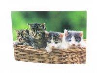 3D Postkarte Kätzchen