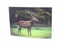3D Postkarte Hirsch