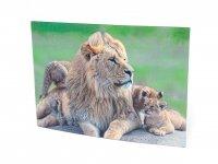 3D Postkarte Löwen Familie