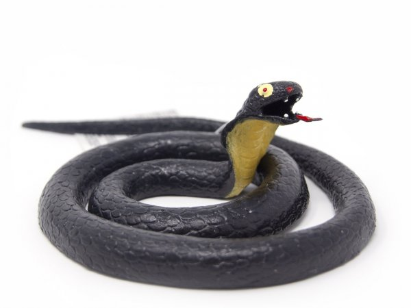 Stretch-Schlange - Wüstenkobra