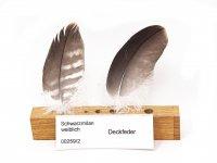 Feder-Set vom Schwarzmilan - Deckfedern - 00259-2