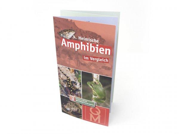 Bestimmungskarte - Heimische Amphibien