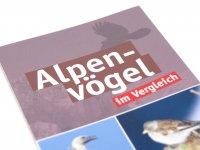 Bestimmungskarte - Alpenvögel
