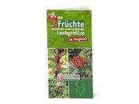 Bestimmungskarte - Die Früchte heimischer und kultivierter Laubgehölzer