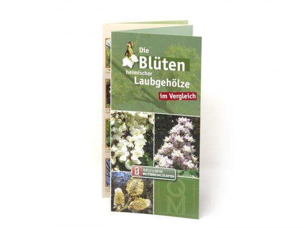 Bestimmungskarte - Die Blüten heimischer Laubgehölze